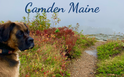 Everything You Need To Know About Traveling With Your Dog In Camden Maine